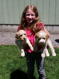 Ariel with her Labradoodle sisiter