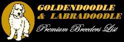 Premium Labradoodle Breeders
